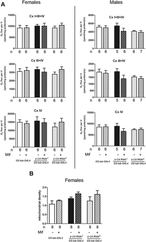 β-CA RNAi does not alter mitochondrial function in fruit flies. a Mitochondrial oxygen consumption (nmol O2/s mg protein) from female and male Drosophila flies using P + Pr + ADP (CI + III + IV), G3P (CIII + IV) and Ascorbate + TMPD (CIV) as substrates. Number of experiments (n) per group is indicated, data are shown as the mean ± SEM. b) Mitochondrial density measured as citrate synthase activity (UNITS mg/ml of mitochondrial protein) shown as the mean ± SEM from 8 replicate experiments. ADP - Adenosine diphosphate; G3P - Glyceraldehyde 3-phosphate; P – pyruvate; Pr – proline; TMPD - N,N,N',N'-Tetramethyl-p-Phenylenediamine dichloride