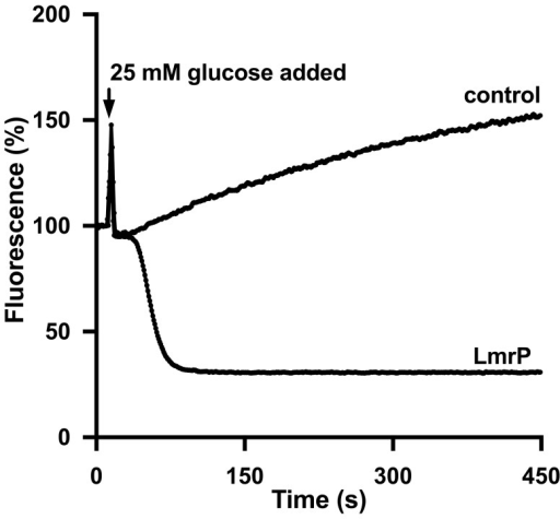LmrP mediates active efflux of ethidium.The efflux experiments described in Fig 3 were performed with ethidium at a final concentration of 2 μM. Traces represent data obtained in three independent experiments using different batches of cells.
