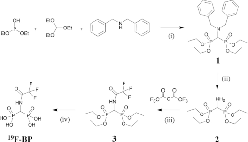 The synthetic scheme of 19F-BP. (i) 29 h at 150–160 °C; (ii) H2, 10% Pd/C catalyst in EtOH, room temperature; (iii) 3 h in dry DCM; (iv) (a) 24 h, Me3SiBr (15 eq) in dry DCM, room temperature (b) 1.5 h MeOH, 1.5 mL, room temperature.
