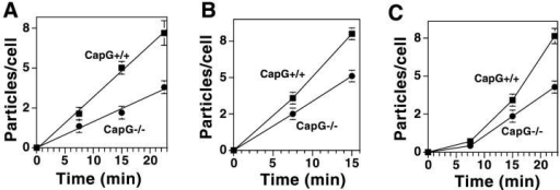 Phagocytic rates of wild-type and Capg−/− macrophages. (A) Line graph quantitating the number of IgG-opsonized zymosan particles ingested over time. Macrophages were exposed to the opsonized zymosan particles and at the times depicted were cooled to 4°C. Cells were overlaid with Trypan blue to quench extracellular particles and the number of particles inside each cell were counted. Brackets represent the SEM of 90–100 cells counted per time point. The slope of the Capg−/− cells was half that of wild-type cells. (B) Line graph quantitating the number of complement-opsonized zymosan particles ingested over time. Brackets represent the SEM of 100 cells per time point. The slope was reduced by approximately 35% in the Capg−/− cells. Wild-type cells failed to ingest additional particles at 22.5 min (mean particles/cell 8.8 ± 0.3; n =100) Therefore, meaningful comparisons between wild-type and Capg−/− cells could not be made at this time point. (C) Line graph quantitating the number of unopsonized zymosan particles ingested over time. No significant ingestion was observed at 7.5 min. Brackets represent the SEM of 100 cells/time point.
