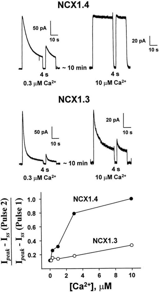 The effect of regulatory Ca2+i on recovery of NCX1.4 and NCX1.3 from Na+i-dependent inactivation using paired-pulse stimulation. The indicated concentrations of regulatory Ca2+i were present throughout the current measurements. The first pulse was activated by applying 100 mM Na+i for 32 s, followed by a 4-s recovery interval. A second, test pulse was then elicited by reapplication of 100 mM Na+i. The graph (bottom) shows representative results from four patches each of NCX1.4 and NCX1.3 over a range of regulatory [Ca2+]i.