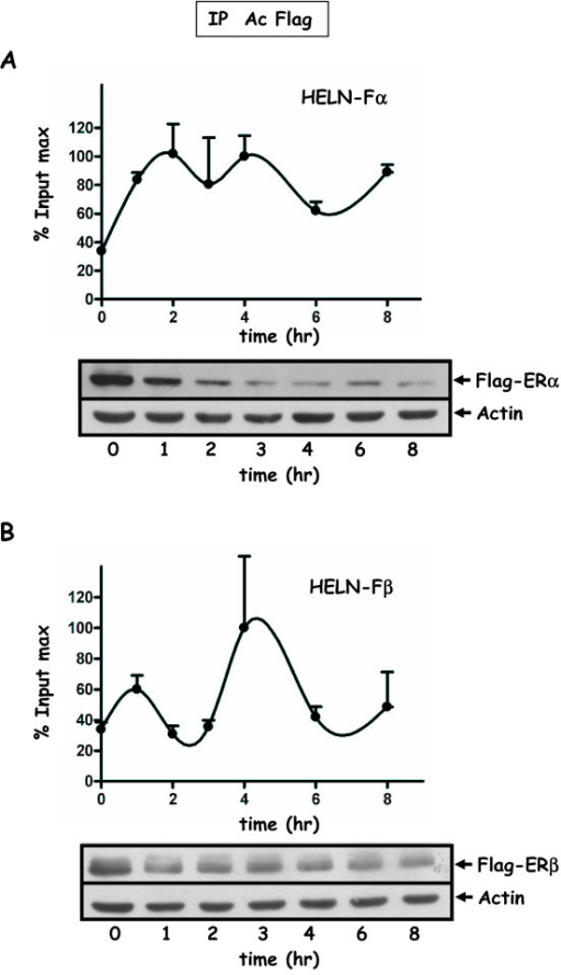 Recruitment of ERα/β to the promoter of the luciferase transgene in HELN-Fα/β cells. Kinetic ChIP experiments were performed using the anti-FLAG antibody. HELN-Fα (A) or HELN-Fβ (B) cells were cultured in 3% dextran-charcoal treated FCS. Twenty four hours before experiment, they were deprived of serum and subsequently treated for 2 hr with 2.5 μM α-amanitin, and then with 10 nM E2. Cells were cross-linked at indicated times. Soluble chromatin was prepared on sampled cells at indicated times as described in material and methods. Real time PCR quantification of either IP chromatin or input was performed at each incubation time. Amplified signals from IP chromatin were calculated as the percentage of amplified input signals obtained during the same amplification. Corresponding values plotted for one curve were expressed as the percentage of the maximum value of % input (% input max) obtained for that curve and for one IP. One ChIP kinetic curve shown is representative of at least two independent experiments and values are mean ± SD of two independent immunoprecipitation assays using the same preparation of chromatin. The % input max average value (corresponding to the two IPs) of one curve may fluctuate among different independent experiments corresponding to the same kinetic. The corresponding amplitudes of variation are: in A (HELN-Fα) Imin = 2.1, Imax = 4.3; in B (HELNβ) Imin = 1.4 Imax = 3.5. Flag-ERα (A) or Flag-ERβ (B) protein levels were analyzed by Western blot experiments. Cell treatments for ChiP assays and Western blot experiments were identical. Extracts were prepared at indicated times, and Western blotted with antibodies for FLAG (F3165) or actin.