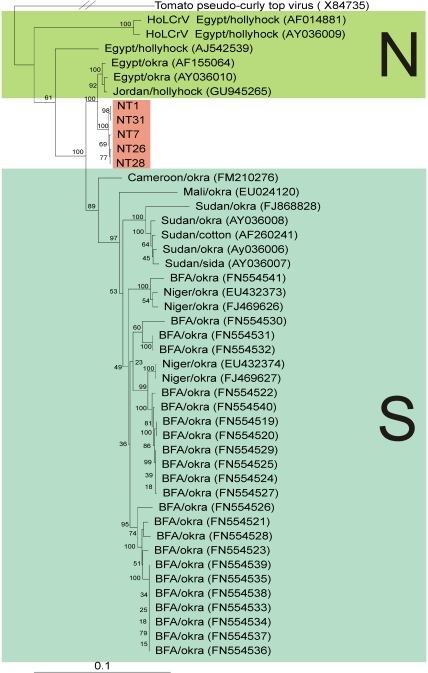 The begomovirus affecting cotton in Sindh likely originates from Egypt.Neigbour-joining phylogenetic dendrogram based upon an alignment of all complete genome nucleotide sequences of Cotton leaf curl Gezira virus (CLCuGV) available in the databases and the two available sequences of Hollyhock leaf crumple virus (the virus species most closely related to CLCuGV) with the sequences isolated from Pakistan. In each case the database accession number is given. The numbers at nodes represent percentage bootstrap confidence scores (1000 replicates). The alignment was arbitrarily rooted on outgroup, the sequence of Tomato pseudo curly top virus (TPCTV), a distantly related geminivirus. The plant species from which viruses were isolated and their geographical origins are indicated; Burkina Faso (BFA). Additionally, the viruses originating from north Africa (N) and from Africa south of the Sahara (S) are indicated.