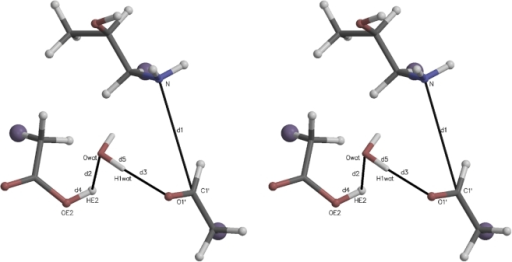 "Stereogram of a typical initial quantum region for carbinolamine formation mediated by an active site water.The large purple ""atoms"" are the link hydrogens, proxies for the classical mechanics sites covalently bonded to the quantum region. The atomic coordinates for this figure were taken directly from one of the Protein Data Bank (PDB) files for the quantum atoms written at the beginning of each QM/MM run. Molecular graphics in this and other similar figures were prepared with MOLSCRIPT [37] and Raster3D [38]."