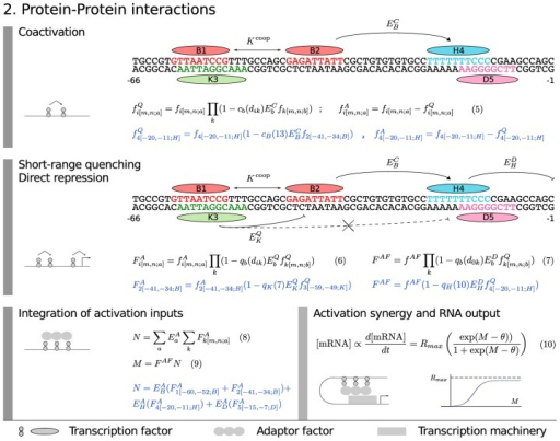 Model equations: protein–protein interactions.The model equations for coactivation (Equation 5), short-range quenching (Equation 6), direct repression (Equation 7), adaptor factor recruitment (Equation 8 and 9) and activation synergy (Equation 10) are shown together in a flow diagram with cartoons of each mechanism on the left and an example application in blue with 5 TF binding sites.