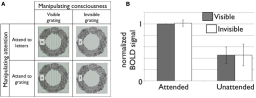 (A) A 2-by-2 factorial design for independent manipulation of top-down attention and conscious visibility of the stimulus (Watanabe et al., 2011). Subjects are asked to carry out one of two attention tasks while viewing either a visible or invisible target stimulus. At the same time, dependent variables, such as hemodynamic responses in the brain, are measured. Here, we illustrate roughly what participants perceived in each condition (not the physical stimulus) in the study by Watanabe and colleagues. Subjects either had to report the presence of a target letter when it appeared or whether they could see the target grating or not. (B) fMRI responses in V1 is strongly modulated by top-down attention but not by conscious visibility of the grating. Modified based on Figures 2, S2 (n = 7 in total) in (Watanabe et al., 2011). The data was provided by the original author. The area under the curve (7–18 s from the block onset) is normalized to the attended and visible condition. The error bar represents 95% confidence interval.