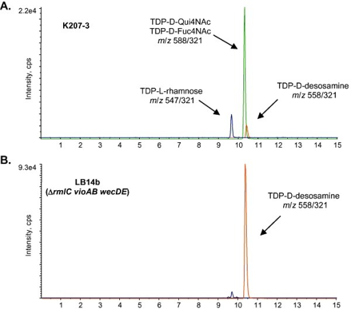 LC/MS/MS analysis of TDP‐sugars in cell‐free extracts of different E. coli mutants expressing the complete TDP‐d‐desosamine biosynthetic operon from plasmid pKOS506‐72B. (A) K207‐3/pKOS506‐72B; (B) LB14b/pKOS506‐72B. m/z parent/daughter pairs for each compound are indicated.