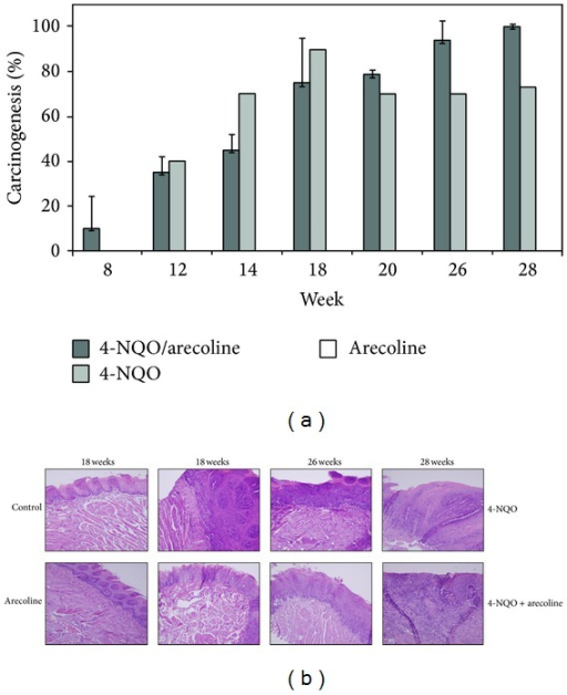 The progression of mouse model development for OSCC. (a) The ratio of carcinogenesis in mouse OSCC model. There were three treatments, 4-NQO/arecoline, 4-NQO, and arecoline. Mice were sacrificed at weeks 8, 12, 14, 18, 20, 26, and 28, respectively. The scoring criteria for mouse OSCC model are described in Section 2. (b) OSCC tongue tissues with tumors were excised, fixed, embedded, and sectioned for H&E staining. The mice that were treated with 4-NQO + arecoline would induce more serious OSCC formation than 4-NQO only and arecoline only. The order of severity was followed the time of treatment.