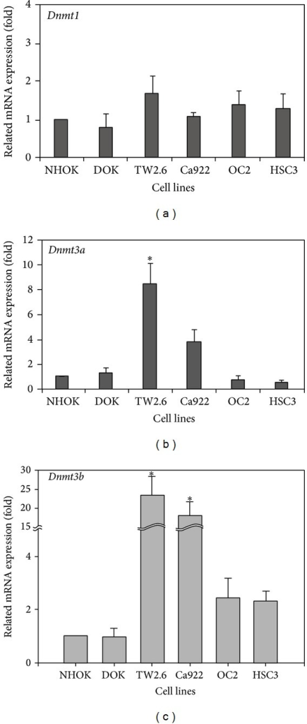 DNMTs RNA expression in human oral cancer cell lines. The measurement of DNMTs expression levels by real-time PCR was showed in (a), (b), and (c), respectively. (a) The Dnmt1 expression was not changed in all human oral cancer cell lines. (b) and (c) TW2.6 and Ca922 were higher expression in Dnmt3a and Dnmt3b than others. The figures shown are the mean of three experiments where all of the samples were analyzed in triplicate. The start sign showed the statistically significant (P < 0.05).