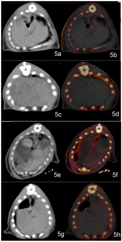 Example of a normal group rat liver.The rat liver periphery is outlined with a black line. The attenuation of the normal rat liver on a general view is homogeneous (CT value is 68 HU). On the VIC image, there are no red dots to show iron (iron enhancement value is −21.31 HU, VNC value is 71.85 HU) (a–b). Example of a rat in the fatty liver group. The rat liver on a general view had mildly lower density (CT value is 52.78 HU). On the VIC image, there are no red dots for iron (iron enhancement value is −13.20 HU, VNC value is 50.22 HU) (c–d). A typical image of a rat in the coexisting iron and fat group. Coincidentally, the dominant iron deposition region (outlined) is separated from the steatosis infiltration dominant region (*). The rat liver on a general view is inhomogeneous. Regions showing higher density might have been caused mainly by iron deposition (CT value is 83.72 HU). Regions showing lower density might be dominated by fat infiltration (CT value is 47.84 HU). On the VIC image, the red regions represent the presence of iron, corresponding to high-density regions on a general view image (iron enhancement value is 23.42 HU) (e–f). The color-absent region is also in accordance with the low-density region on the general view image (VNC value is 43.58 HU). Example of a rat in the liver iron group. The rat liver on general viewing showed mildly higher density (CT value is 80.35 HU). On the VIC image, there are scattered red dots that represent the presence of iron (iron enhancement value is 4.27 HU; VNC value is 72.35 HU) (g–h).