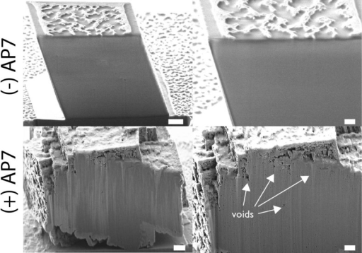 Representative scanning electron microscopy images of focused-ionbeam-sectioned Ir-coated crystals obtained from protein-deficientand AP7-containing assays. White arrows denote locations of subsurfacevoids. Scale bars are 200 nm. Note that the nanopatterning on thecontrol crystal surfacesis generated by bombardment of the sample with a Ga ion beam. Additionalimages that document subsurface porosities can be found in the Supporting Information.