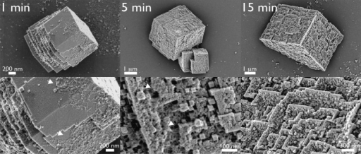Scanning electron microscopyimages of mineral deposits and AP7phases that form in time-resolved mineralization assays. Images inthe bottom row represent higher magnifications of important featuresfor each time point. At 1 min, note the resemblance between the crystal-boundproteinphases and those deposited on SI wafers (Figure S5 of the Supporting Information). White arrows denotethe location of AP7 protein phases captured on crystal surfaces.