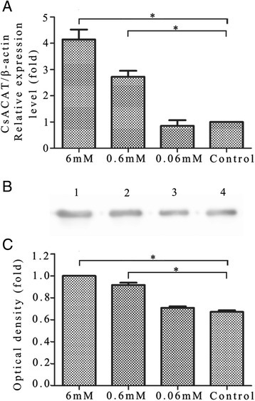 Expression level and enzymatic activity ofCsACAT in adult worms incubated in lecithin. (A) mRNA levels of CsACAT in worms cultured with different concentrations of lecithin were evaluated by quantitative real-time PCR. (B) Crude proteins extracted from worms cultured in 6 mM (Lane 1), 0.6 mM (Lane 2), 0.06 mM (Lane 3) of lecithin and control group (Lane 4) were probed with rat anti-rCsACAT serum. (C) Optical density analysis of the protein levels. The optical density was calculated by Tanon Gis software and analyzed by Student's t test, *p < 0.05.