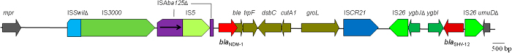 Genetic context of blaNDM-1 in E. coli strain WCHEC13-8.ISAba125 was interrupted by the insertion of IS5. Genes shown from the left in order are mpr (encoding a zinc metalloproteinase), blaNDM-1, ble (mediating bleomycin resistance), trpF (encoding a phosphoribosylanthranilate isomerase), dsbC (encoding an oxidoreductase), ctuA1 (encoding an ion tolerant protein), groL (encoding a chaperonin subunit), ygbI (a putative dehydrogenase gene), a truncated ygbJ (a putative DEOR-type transcriptional regulator gene), blaSHV-12 and a truncated umuD (encoding a mutagenesis protein).