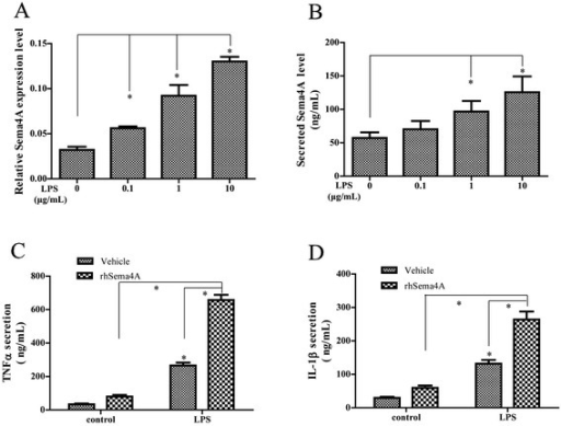 Semaphorin 4A (Sema4A) promotes TNF-α and IL-1β production in lipopolysaccharide (LPS)-activated THP-1. Expression (a) and secretion (b) of Sema4A were analyzed by qRT-PCR and ELISA in THP-1 after LPS stimulation. Secretion of TNF-α (c) and IL-1β (d) was determined by ELISA after recombinant human semaphorin 4A (rhSema4A), or in combination with LPS treatment. *P <0.05 (statistically significant differences)