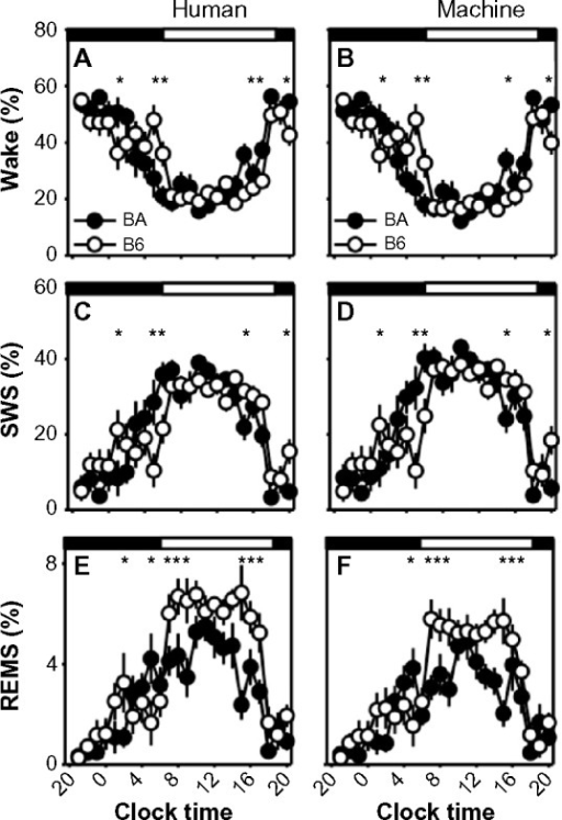 Strain differences in sleep/wake state timing scored in 10-second epochs.Notes: Strain differences in the time course of sleep/wake states were observed in human-scored data (A, C and E) or machine-scored data (B, D and F). Filled circles represent data from the BA strain, and open circles represent data from the B6 strain. Asterisks indicate 60-minute epochs in which there is a statistically significant difference between strains (Fisher's protected least-significant difference). Timing of the dark and light phases of the 12:12 cycle is indicated by the black and white bars at the top of each graph.Abbreviations: B6, C57BL/6J mice; BA, BALB/CJ mice; REMS, rapid-eye-movement sleep; SWS, slow-wave sleep.