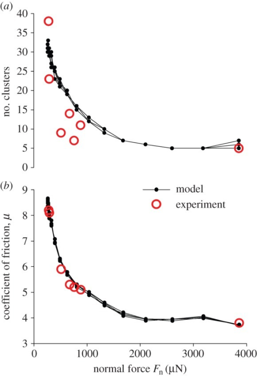 Predicted (small solid dots) and experimentally determined (open circles) values of (a) the number of clusters after five consecutive sliding cycles and (b) the friction coefficient at the first sliding cycle at different normal loads Fn on the surface of the arrays. The model data are overdrawn from six runs of the code with the same parameters.