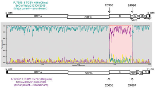 Potential recombination points in the SeCoV strains in study of swine enteric coronaviruses in Italy. The potential parent strains H16 (TGEV) and CV777 (PEDV) are shown in teal and purple, respectively. Arrows indicate recombinant breakpoints. PEDV, porcine epidemic diarrhea virus; TGEV, transmissible gastroenteritis virus; seCoV, swine enteric coronavirus.