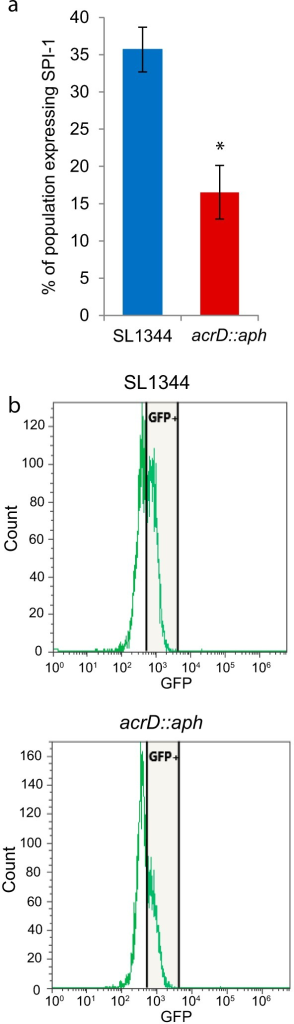 SPI-1 expression of the acrD::aph strain. Strains containing the promoter of prgH (SPI-1) fused to gfp were analyzed by flow cytometry and the number of fluorescent and nonfluorescent cells were enumerated. (a) Mean results ± standard deviations. *, P < 0.05. (b) A representative example of the flow cytometry results for SL1344 and SL1344 acrD::aph cells.