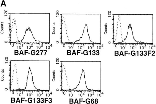 Induction of c-myc  mRNA expression in BAF transformants expressing various  G-CSFR–gp130 chimeric receptors. (A) FACS® analysis for the  expression levels of the chimeric  receptors on the BAF transformants. Cell lines tested were as follows: BAF-G277, BAF/B03 transformants  bearing a chimeric receptor, the extracellular domain of the G-CSFR and  the truncated gp130 including the transmembrane and cytoplasmic 133– amino acid residues, referred to as G133 (shown as BAF-G133), G133F2  with a tyrosine (Y) to phenylalanine (F) mutation at the second tyrosine,  Y759 (BAF-G133F2), G-133F3, with a Y to F mutation at the third  tyrosine Y767 (BAF-G133F3), and G-68, bearing the 68 membrane-proximal amino acid residues of the cytoplasmic region of gp130 (BAF-G68). (B) Northern blot analysis for c-myc mRNA expression in BAF  transformants expressing various G-CSFR–gp130 chimeric receptors.  Total RNAs extracted from the various BAF transformants which had  been deprived of IL-3 for 12 h and stimulated with nothing or G-CSF at  100 ng/ml for the indicated periods of time were subjected to Northern  blot analysis for c-myc mRNA expression. Cell lines tested were as follows: BAF-G277 (lanes 1–3), BAF-G133 (lanes 4–6), BAF-G133F2 (lanes  7–9), G-133F3 (lanes 10–12), and BAF-G68 (lanes 13–15).