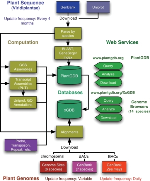 Database schema for PlantGDB, showing data sources, update frequency, computation and web services. PlantGDB is accessible at http://www.plantgdb.org, and genome browsers are accessible at http://www.plantgdb.org/XxGDB, where Xx is the first letter of the genus and species (e.g. AtGDB = Arabidopsis thaliana genome database).