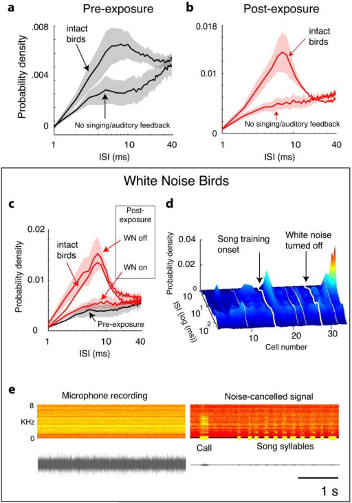 RA sleep activity in absence of auditory feedback (WN or muted). a, ISI distributions prior to tutor song exposure, averaged across two muted birds and four birds raised in WN (lower black line), and averaged (for comparison) across 13 birds with normal feedback (upper black line). b, WN and muted birds fail to show tutor song-specific ISI distributions after song exposure. Lower red line: mean post-exposure distribution from muted and WN birds (5/6 birds heard Song 1). Upper red line: mean distribution from intact Song 1 birds (same as in Fig. 2c,). c, Bursting returns when feedback is restored. WN birds (n=4) both pre-exposure (black line) and post-exposure but in WN (lower red line) show suppression of bursting; bursting recovers after WN is turned off (upper red line). Compare with distribution for intact Song 1 birds (middle red line). d, Profound suppression of bursting for all cells in a WN bird. The second night following withdrawal of WN, bursting appears. White lines represent daytime. e, Recording of singing in presence of 100 dB WN without and with noise cancellation (left and right, respectively). Right, bold yellow lines mark vocalisations.