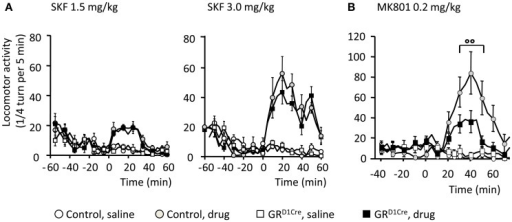 Normal D1-like dopamine receptor agonist induced locomotor activity, but impaired MK801-elicited hyperlocomotion in GRD1Cre mice. Locomotor responses are presented as ¼ turn per 5 min. (A) Locomotor response to saline and SKF81297 1.5 mg/kg (left panel) and 3 mg/kg (right panel) in control and GRD1Cre mice. Interaction Drug × Time for SKF81297 at 1.5 mg/kg [F(17, 714) = 10.3, P < 0.001] and 3 mg/kg [F(17, 714) = 9.4, P < 0.001], but no interaction Drug × Time × Genotype, F(17, 714) = 1.2, P > 0.05 and F(17, 714) = 0.8, P > 0.05, respectively. (B) MK801 elicited a stronger hyperlocomotion in control than GRD1Cre mice, interaction Drug × Time × Genotype, F(18, 756) = 1.9, P < 0.01. °°P < 0.01, control vs. mutant. n = 8–14 mice per group.