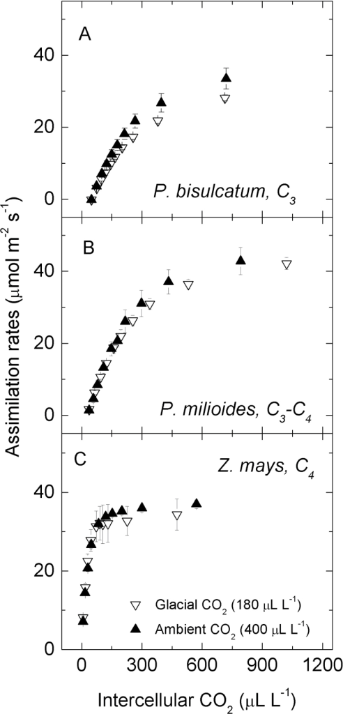 Responses Of Co2 Assimilation Rate To Increasing Interc Open I