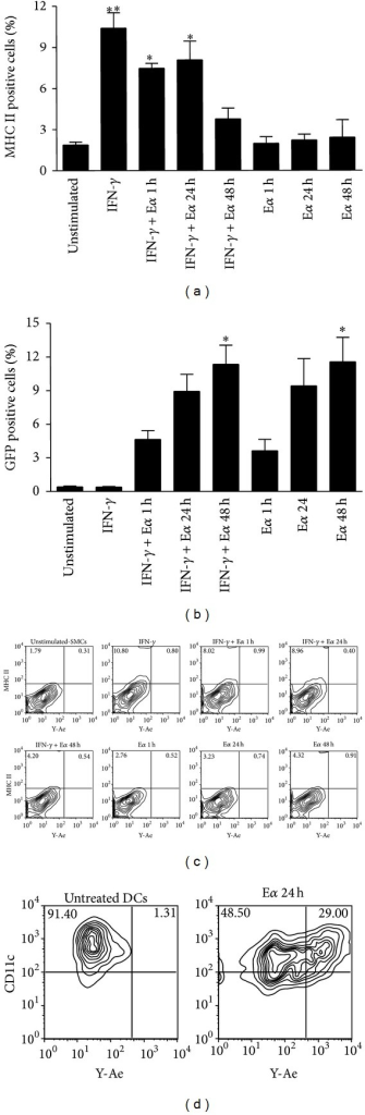 SMCs acquire exogenous antigens but fail to present them in the context of MHC class II. Evaluation of antigen uptake/presentation by murine SMCs. SMCs were stimulated with IFN-γ (100 ng/mL) for 72 h and subsequently treated with Eα-GFP peptide (100 µg/mL) for the indicated time points. (a) MHC class II expression. (b) GFP expression. (c) Representative flow cytometry plots showing no positivity of SMCs to the Y-Ae Ab or (d) positivity of DCs, used as a positive control. Results are expressed as mean ± SEM from three separate experiments. *P < 0.05, **P < 0.01, versus unstimulated cells.