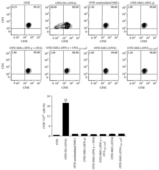 SMCs fail to induce OT-II CD4+ T cell proliferation. Representative plots and relative statistical analysis showing the effect of SMCs on OT-II CD4+ T cell proliferation. IFN-γ-stimulated SMCs were treated with OVA (1 mg/mL) or OVA323–339 peptide (0.5 µg/mL) overnight and then cocultured with CFSE-labeled OT-II CD4+ T cells for 72 h. OVA-treated DCs were used as a positive control. Results are expressed as mean ± SEM from three separate experiments run in triplicate. **P < 0.01 versus OT-II CD4+ T cells alone.