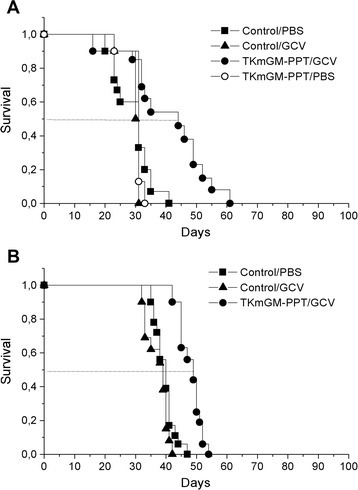 Survival period of mice inoculated with A) adenocarcinoma C26; B) cervical squamous carcinoma CSC5 after injection of TKmGM-PPT. TKmGM (CMV-HSVtk-mGM-CSF-pGL3 construct); PPT - polyethylenimine-polyethylene glycol-TAT peptide copolymer; PBS – phosphate buffered saline (placebo); GCV – ganciclovir.