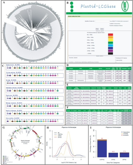 Screenshots for major functional modules of Plastid-LCGbase. (A) Phylogenetic trees for 470 species built from whole plastid proteomes. (B) The search page for determining conserved gene pairs and visualizing gene orders. (C) The result page from search pages. Arrows and orientation indicate genes and their transcription direction. (D) The browse page. (E) The gene list page. (F) The gene pair page. (G) The genome map page. (H) Distributions of TSS distances from the three types of gene pairs. (I) Barplots of the three types and three patterns of gene pairs.