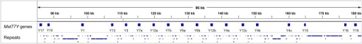 "General view of the Mst77Y region (MHAP assembly). All 18 Mst77Y genes are located in a single contig (JSAE01000257). Gene names were abridged (Mst77Y-1 as ""Y1,"" Mst77Y-17ψ as ""Y17,"" and so forth). All genes have the same orientation (not visible at this scale). The red tick near 110 kb marks the unmatched k-mer found in this region (caused by a C/T substitution in an intergenic region). The pseudogenes of Pka-R1 and CG3618, which flank each Mst77Y gene, were omitted for the sake of clarity. Repeats (mostly retrotransposons) occupy 48% of the sequence."