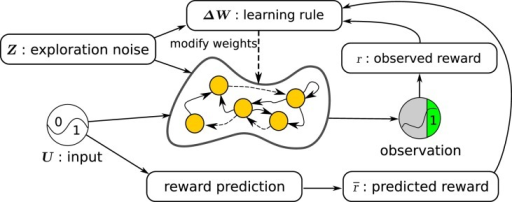 Overview of the learning setup for recurrent neural networks. The initially random recurrent neural network receives the inputs U and the exploration noise Z. The state of the postsynaptic neurons is computed by applying the hyperbolic tangent function to the sum of the inputs, the noise, and the weighted sum of the presynaptic neurons. Observations are made of the state of the network and after every trial (fixed number of time steps), a reward is computed, based on the observations made during the last trial. In parallel, a simple reward prediction network predicts the expected reward for the given input. The learning rule then updates the weights between the presynaptic and postsynaptic neurons, by using the reward, the expected reward, the exploration noise, and the states of the presynaptic neurons.