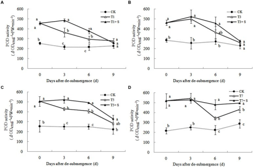 Effects of Spd on peroxidase (POD) activity of rice after submergence.