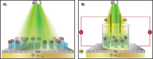 "(A) Schematic presentation of the experimentalsetup for the spin-dependent photoluminescence measurements. (B) Schematicpresentation of the light-induced spin-dependent electrochemical measurementsrecorded in a homemade electrochemical cell in the presence of trisbuffer containing 5 mM K4[Fe(CN)6]/K3[Fe(CN)6]. The ferromagnetic substrate was the workingelectrode (WE), whereas platinum wire and KCl-saturated calomel electrode(SCE) were used as the counter (CE) and reference (RE) electrodes,respectively. The working electrode was based on multiple ferromagneticlayers, and it was coated with the Ala8–CdSe NP assemblies.In both cases, a permanent magnet (H = 0.35 T) wasplaced underneath the modified ferromagnetic substrate and the directionof the magnetic dipole was flipped either pointing ""UP""or ""DOWN"" (white and yellow arrows, respectively). Inall cases, a green laser (λexc = 514 nm) was usedfor exciting the CdSe NPs."