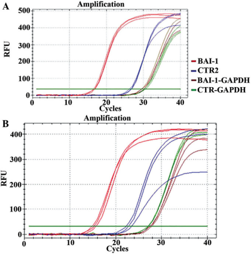 Quantitative polymerase chain reaction analysis of (A) HUVEC-BAI-1 and (B) T24-BAI-1 cells. HUVEC, human umbilical vein endothelial cell; BAI-1, brain-specific angiogenesis inhibitor-1; CTR, control plasmid; GAPDH, internal control, glyceraldehyde 3-phosphate dehydrogenase; RFU, relative fluorescence units.
