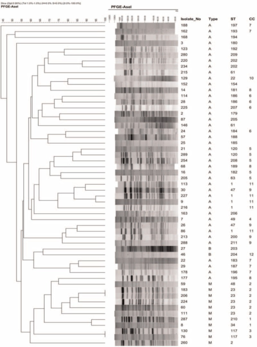 Image of pulsed-field gel electrophoresis (PFGE) restriction patterns of 55 isolates and phylogenetic comparison of sequence types (STs) and clonal complexes (CC). CC = clonal complexes, PFGE = pulsed-field gel electrophoresis, ST = sequence types.
