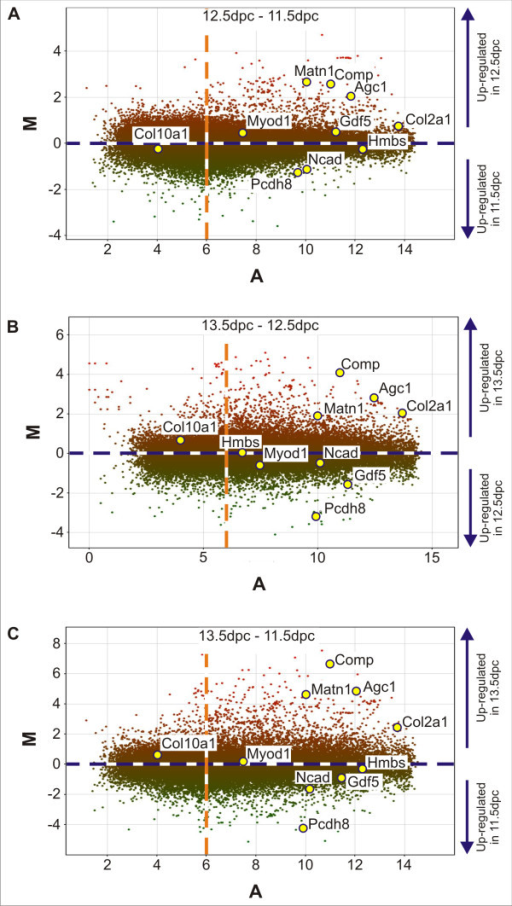 Mouse whole genome microarray M/A scatter plots. A) 12.5 dpc – 11.5 dpc. B) 13.5 dpc – 12.5 dpc. C) 13.5 dpc – 11.5 dpc. M represents the log ratio of the two dyes and A represents the average Log2 intensity. Yellow spots with blue outline indicate the expression data for selected genes. The dashed blue line indicates a fold difference of zero representing no differential expression between the two samples analysed. The dashed orange line indicates a average Log2 intensity (A) of 6, representing the background signal intensity.