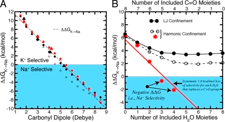 Dependence of K+/Na+ selectivity on ligand composition in eight-ligand binding site models where ligand distances are generically confined to be within a 3.5-Å radius of the central ion. (A) The conventional field strength trend observed by Eisenman is illustrated by the dependence of selectivity, ΔΔG, on the dipole moment of linear ligands. Results were taken from binding site models described previously (red triangles, Noskov et al., 2004; black triangles, Thomas et al., 2007; circles were calculated with standard [black] or modified [red] CHARMM parameters, Bostick et al., 2009). Filled circles show results from a half-harmonic boundary restraint, and open circles show the corresponding Lennard-Jones restraint. The conventional field strength trend (dashed line) is independent of these different restraints. (B) Dependence of K+/Na+ selectivity, ΔΔG, on incremental replacement of carbonyl-like dipolar groups with water molecules. In contrast to the trend in A, recent work predicted a systematic loss of selectivity for each water molecule that replaces a carbonyl group (∼1.8 kcal/mol per water using the CHARMM force field) (Noskov and Roux, 2006, 2007). The red line illustrates this trend toward Na+ selectivity, which supports the revised field strength model. Data from subsequent calculations (Bostick et al., 2009), using the same force field and either a Lennard-Jones (LJ, black solid lines/circles) or a half-harmonic (black dashed lines and open circles) confining potential, do not eliminate the K+ selectivity.