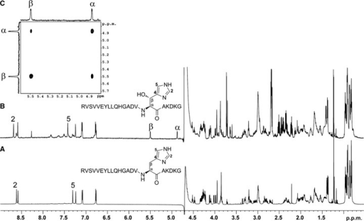 FIH catalysed His-hydroxylation occurs at the β-position. Hydroxylated TNKS2 538–558 peptide (RVSVVEYLLQHGADVHAKDKG) was produced by incubation with FIH under standard assay conditions (hydroxylated to ∼ 75% as assessed by MALDI-TOF analyses), LC-MS purified and analysed by NMR spectroscopy. (B) 1H NMR spectrum of the hydroxylated TNKS2 538–558 peptide in 2H2O. The resonances at 4.87 and 5.50 ppm, which are absent in the 1H NMR spectrum of the nonhydroxylated TNKS2 538–558 peptide (A), are ascribed to the α- and β-proton, respectively, of the hydroxylated His residues. The resonances for the imidazole ring protons (at positions 2 and 5) are deshielded in the spectrum of the hydroxylated peptide compared to that of the nonhydroxylated. (C) 2D 1H–1H COSY spectrum of the hydroxylated TNKS2 538–558 peptide in 2H2O indicating the 1H–1H correlation between resonances arising from the α- and β-hydrogens of the hydroxylated His residue.