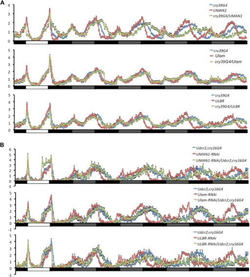 Over-expressing or knocking down nuclear envelope components alters circadian rhythms in flies.(A) Normalized locomotor activity profiles of flies over-expressing MAN1, Lam, or LBR during LD for 1 day followed by 4 days of DD. (B) Normalized locomotor activity profiles of flies with MAN1, Lam, or LBR knocked down by RNAi. White box indicates light period, black box indicates dark period, and gray box indicates subjective light period. Error bars represent SEM (n = 13–76).DOI:http://dx.doi.org/10.7554/eLife.02981.006