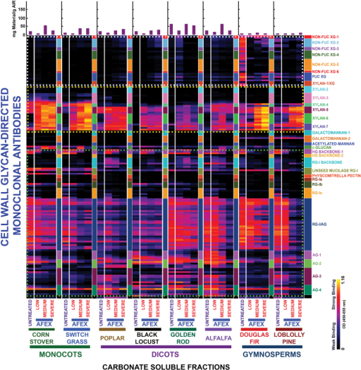 Heat map analyses of the relative abundance of major non-cellulosic cell wall glycan epitopes in carbonate extracts from eight phylogenetically diverse plant biomasses with or without AFEX™ pre-treatment. Carbonate extracts were prepared from cell walls isolated from diverse classes of plant biomass as explained in the Materials and Methods. The extracts were subsequently screened by ELISA using a comprehensive suite of cell wall glycan-directed mAbs. Binding response values are depicted as heat maps with a black–red–bright yellow colour scheme, where bright yellow represents the strongest binding and black no binding. The dotted boxes outline sets of antibodies whose binding signals were used for the scatter plot analyses shown in Fig. 4. The amount of carbohydrate material recovered per gram of cell wall is depicted in the bar graphs (purple) above the heat maps. The panel on the right-hand side of the heat map shows the groups of mAbs based on the class of cell wall glycan they each recognize.