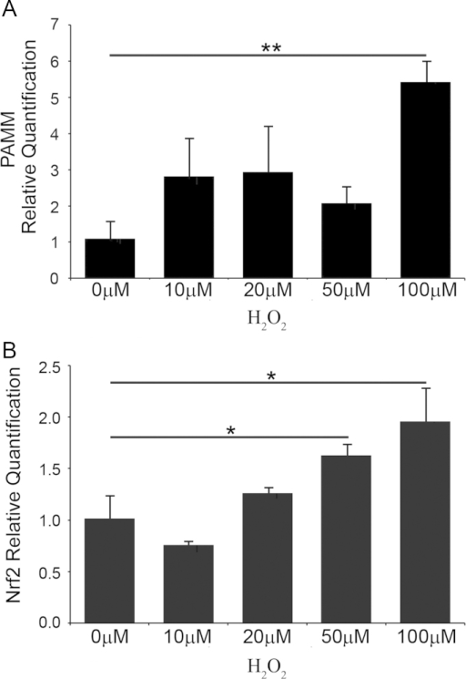 Antioxidant stress induces PAMM mRNA expression in human PBMCs. Human peripheral blood mononuclear cells (PBMCs) were treated with increasing concentrations of H2O2 (0, 10, 20, 50 and 100 µM) for 20 min. Total RNA was extracted 24 h after treatment, reverse transcribed into cDNA and analyzed by real-time PCR. (A) PAMM mRNA abundance is significantly increased by treatment with 100 µM H2O2 in human PBMC. (B) Nrf2 mRNA abundance is significantly increased by treatment with 50 and 100 µM H2O2 in human PBMC compared with untreated cells.
