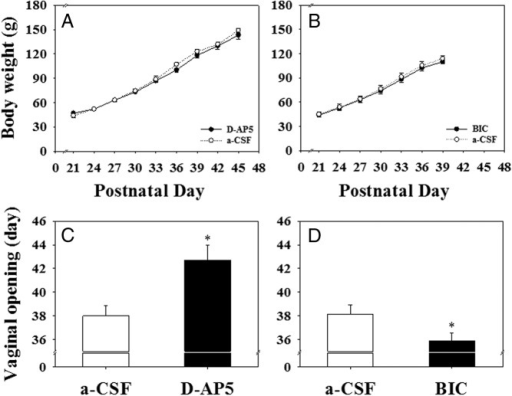The effect of bilateral chronic microinfusion of D-AP5, BIC, or a-CSF (6 μL/d) in the MePD for 14 days starting on pnd 21 on body weight gain and the day of the vaginal opening in rats. A and B, There were no significant differences in cumulative body weight gain between the D-AP5 (90 nmol per 6 μL/d, bilaterally, for 14 d) or BIC (13.56 pmol per 6 μL/d, bilaterally, for 14 d) treatment groups and their corresponding aCSF controls. C, Chronic infusion of D-AP5 resulted in a significant delay of puberty onset. D, Chronic infusion of BIC in the MePD resulted in a significant advancement of puberty onset in female rats. *, P < .05 vs aCSF control. Results represent mean ± SEM (n = 5–8 per group).
