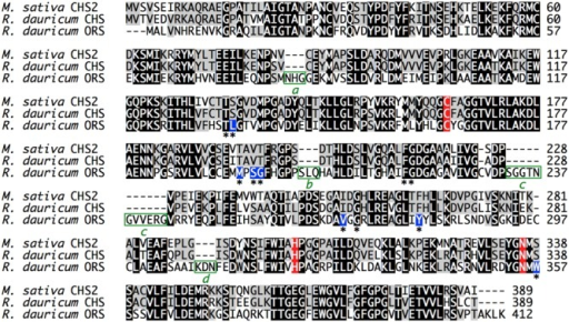 Multiple amino acid sequence alignment of M. sativa CHS2 and R. dauricum CHS and ORS. The catalytic triad residues are colored red, and the active site residues are indicated with asterisks. The varied active site residues in ORS are colored blue. The four inserted peptide sequences a–d in ORS are highlighted by green boxes.