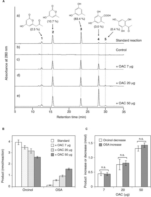 Analysis of reaction products afforded by the recombinant ORS from acetyl-CoA and malonyl-CoA. (A) HPLC elution profiles of (a) the standard reaction using 20 μg of ORS, (b) the control reaction with heat-denatured ORS, and (c–e) the reactions using 20 μg (∼0.42 nmol) of ORS, along with 7, 20, or 50 μg (∼0.58, 1.7, and 4.2 nmol) of C. sativa OAC, respectively. The percentages of each product under standard assay conditions are shown in the parentheses. Note that each product has different molar extinction coefficients, and thus the peak intensities are not equal to the product percentages in the parentheses. (B) Orcinol and OSA product amounts from reactions without or with the indicated amounts of C. sativa OAC. Data are means ± SD of triplicate determinations. (C) OAC-dependent orcinol decrease and OSA increase, as compared with the product amounts under standard assay conditions. Data are means ± SD of triplicate determinations. n.s., not significant by Student's t-test (P > 0.05).
