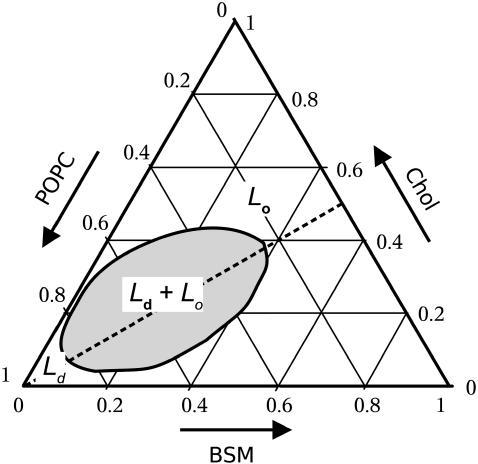 simplified phase diagram for a ternary mixture of bsm c. Black Bedroom Furniture Sets. Home Design Ideas