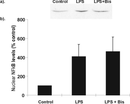 Effect of bisindolylemaleimide (Bis) on LPS stimulated NF-κB activation in RAW 264.7 cells. RAW cells were stimulated with LPS (1 μg/ml) in the presence or absence of Bis (20 μM) for 3 hr. Cells were harvested and nuclear NF-κB-p65 levels were assessed by Western blotting. (a) Representative Western blot of p65 expression. Equal amounts of nuclear proteins were loaded onto each lane. (b) Graphical representation of % increase in p65 nuclear localisation is shown in (a) above. Data is presented as mean ± SEM, n = 3 independent measurements.