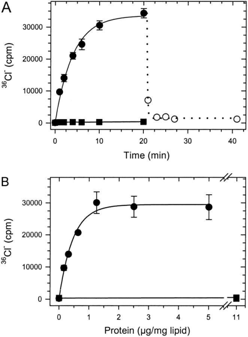 36Cl− flux through reconstituted EriC. Concentrative uptake of 36Cl− was followed as in materials and methods. (A) Time course of accumulation of 36Cl− in vesicles reconstituted with 4.5 μg EriC/mg lipid (•, mean ± SEM, n = 4) or without protein (▪, n = 1). 36Cl− release was measured after addition of valinomycin at 21 min (○, n = 1). (B) Protein concentration-dependent accumulation of 36Cl− into vesicles reconstituted with EriC (○, •) or KcsA (▪). Uptake was measured at 20 min (mean ± SEM, n = 3).